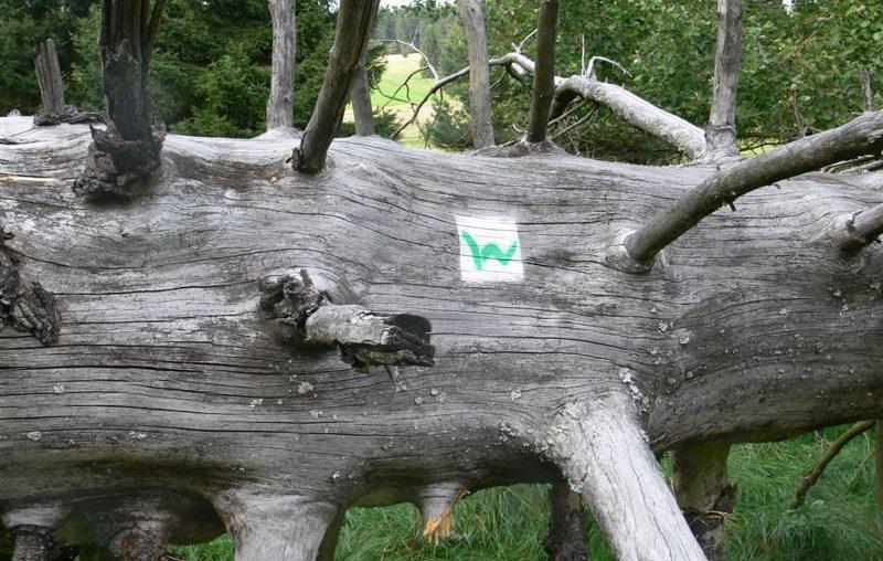Westerwaldsteig - Bloggerwandern 2016